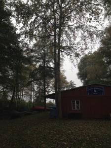 2014.10.25 RSG53 Baumfällung (1)