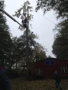 2014.10.25 RSG53 Baumfällung (28)