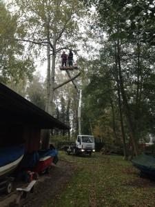 2014.10.25 RSG53 Baumfällung (8)